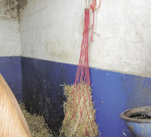 Dans quel ordre distribuer les aliments aux chevaux - Purger les radiateurs dans quel ordre ...