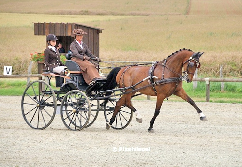 rion Vignaud remporte le CAI3 un cheval avec Winston W (© Pixel Visuel)