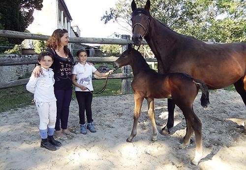 Concours de foals hammeville 54 h par douglas du gu dans son jardin - Mettre du crottin de cheval dans son jardin ...