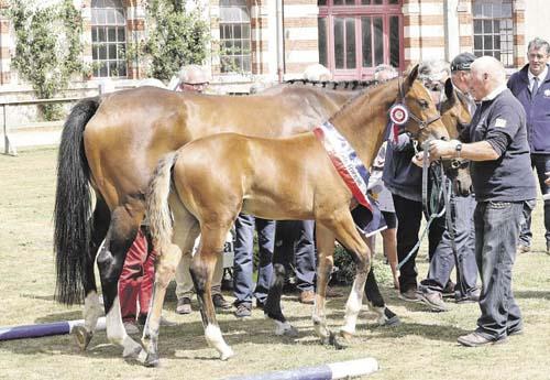Jasmin du Luot, foal suprême et 1er des mâles jeunes