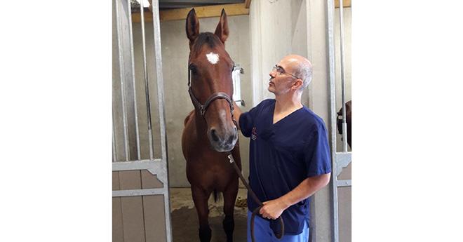 Dr Olivier Geffroy, fondateur de VetMasterclass HORSE