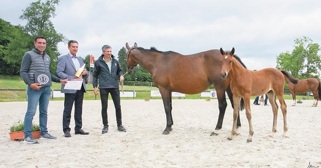 Kandinski du Lozon est élu Champion Fences (© Mélanie Guillamot)