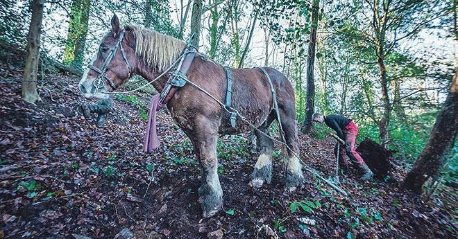 Le cheval, un allié important pour la bonne gestion et la préservation des sols (© Damien Goret / Brest métropole)